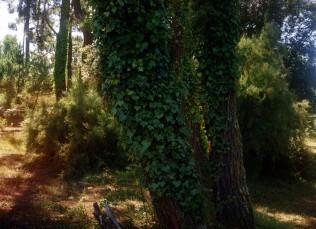 Nature Eight