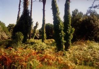 Nature Five