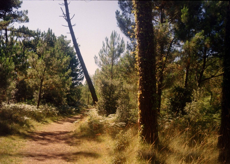 Nature Three