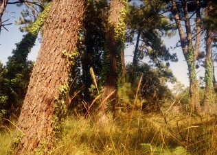 Nature Seven
